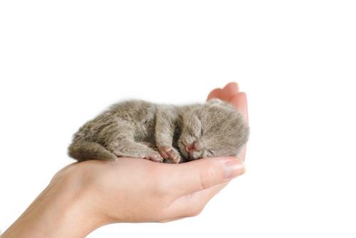 Kitten 0 6 Weeks